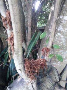 Spaghnum Moss