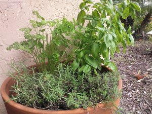 Terracotta Herb Container