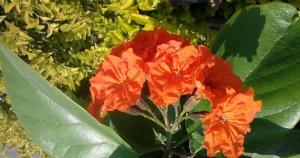 Geiger Flower