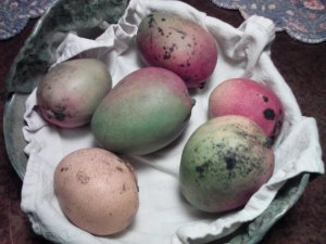 Assorted Mangoes