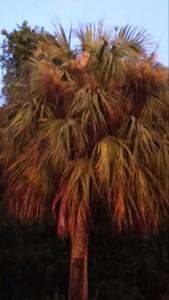 Apocalyptic Palm Tree
