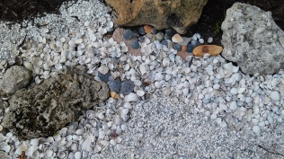 Shells and Rocks